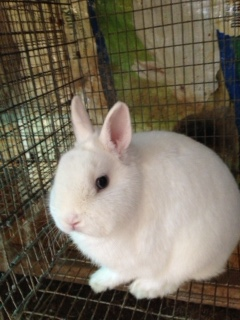 Our Rabbits - Dou